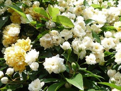 Mokkoubara20102_2